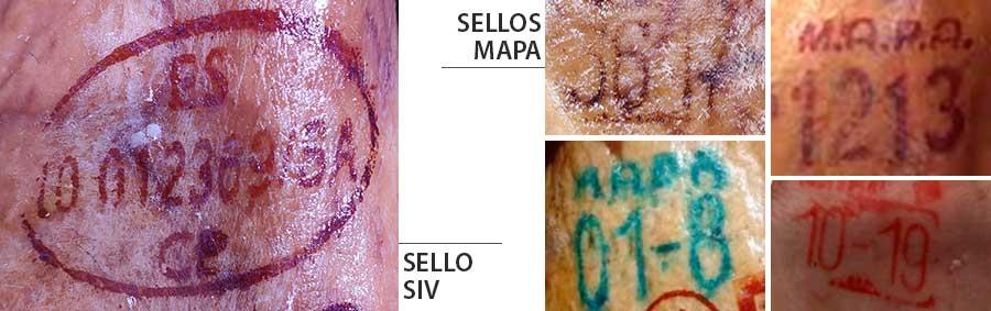 Sellos SIV y MAPA para identificar jamones
